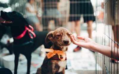 Adopting a Pet Far Outweighs Buying One